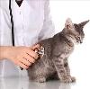 Ветеринарные клиники в Деркуле